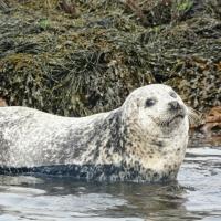 Seal Trip @ Dunvegan Castle
